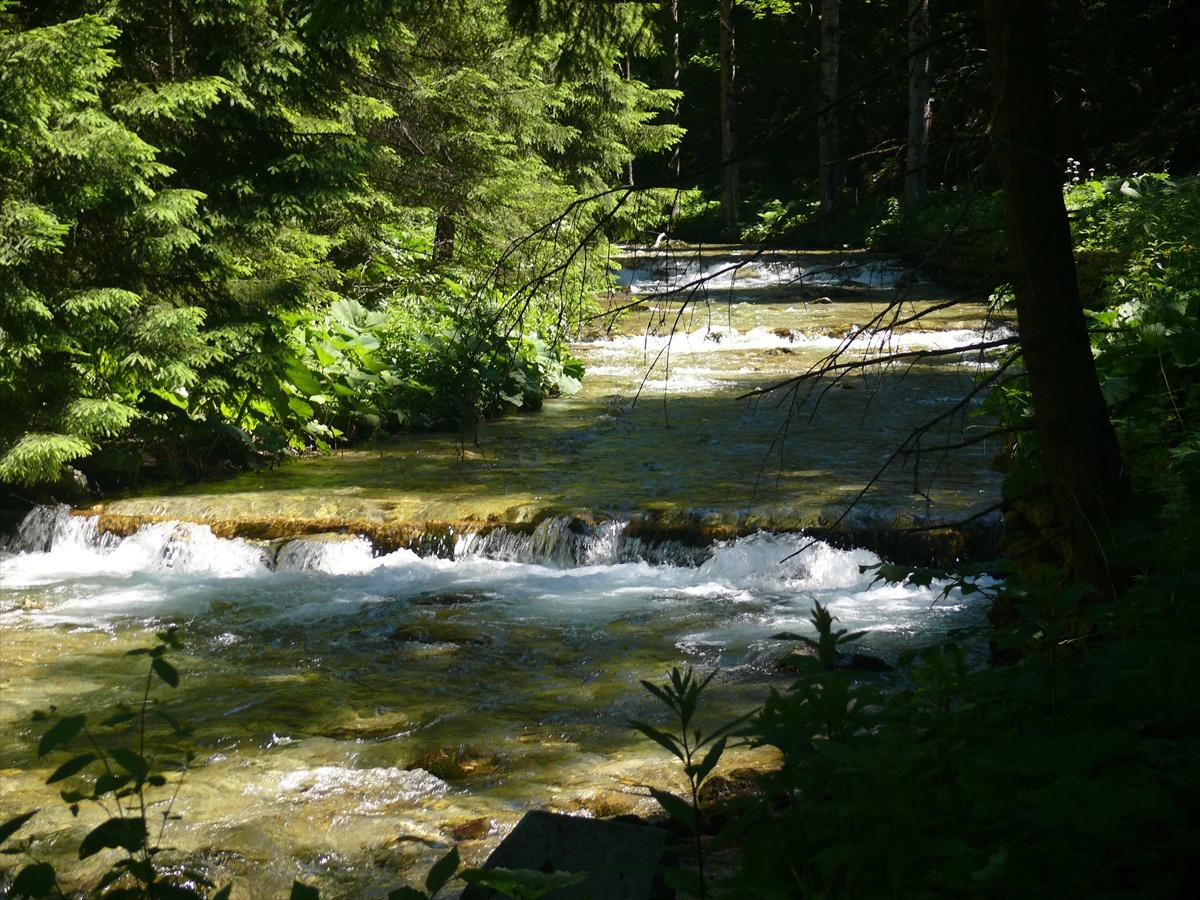 Zásah 12/2019 – vybreženie Blatnického potoka