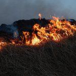 Zásah 2/2021 – požiar trávnej plochy